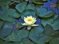 Weekly Prayer – A Prayer of Gratitude to Maha Lakshmi